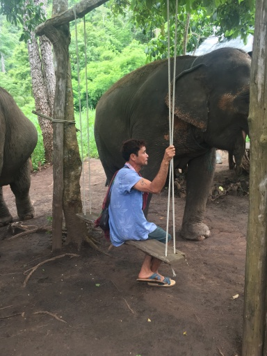 Each elephant has their own care taker who works with them daily. They feed, wash, and care for the elephant. In addition, they use positive reinforcement to develop elephant trust.