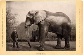 Michael Scott and Jumbo. Photograph: Digital Collections and Archives, Tufts University.