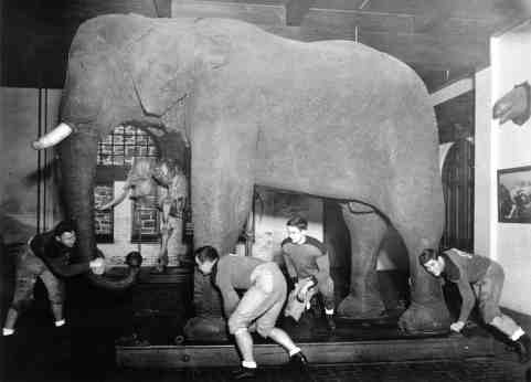 American football players face off with Jumbo in Barnum Hall, Tufts University in 1935. Photograph: Melville S. Munro/Digital Collections and Archives, Tufts University